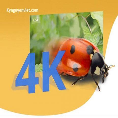 So sánh máy chiếu vật thể HD, Full HD và 4k